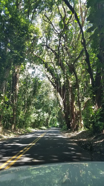 Hawaii Route 61 - Pali