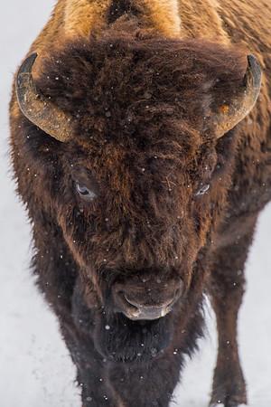 Yellowstone Feb 10, 2017