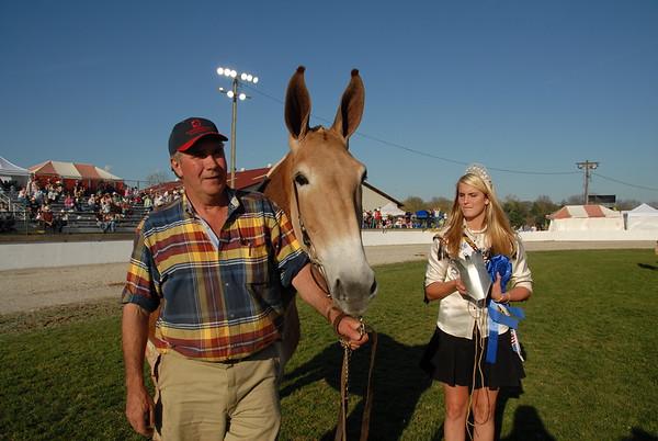 2006 Draft Mule Show