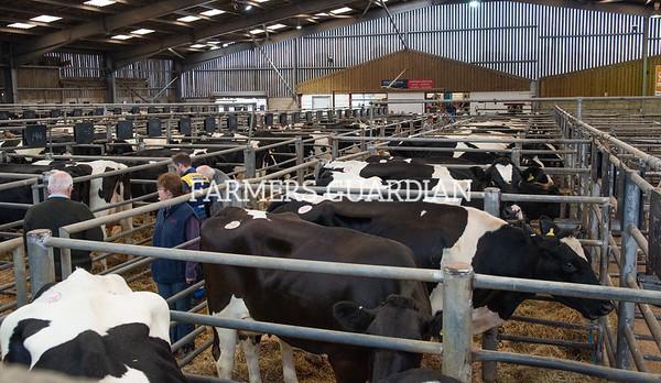 Dairy dispersal Ashfields Farm, Staffs
