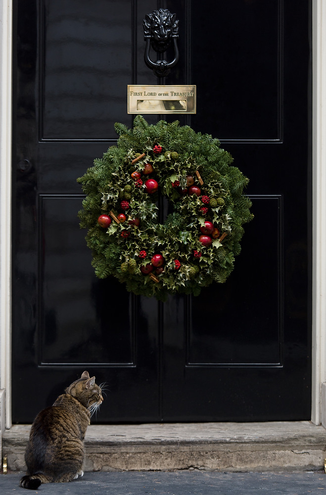 Description of . Freya, the Chancellor's cat, sits on the doorstep of number 10, Downing Street in central London on December 23, 2012. LEON NEAL/AFP/Getty Images