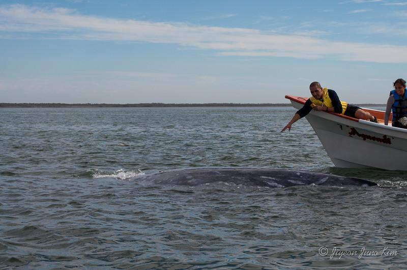 Mexico-Loreto-Whale-2063.jpg