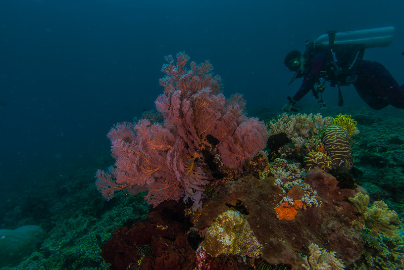Taken at Telaga Nita divesite in Ternate Island, North Maluku, Indonesia during our 8D7N excursion in March 2018