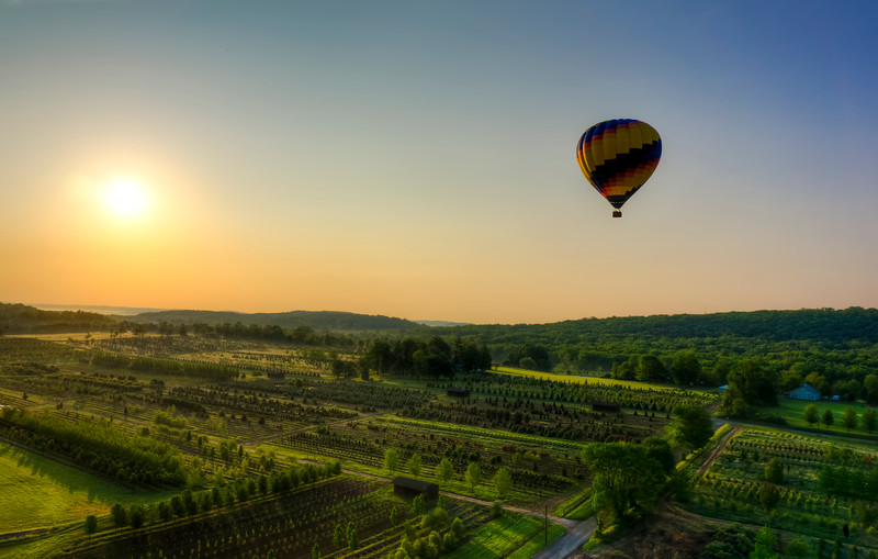 bucks balloon - big balloon over tree farm at sunrise (p).jpg