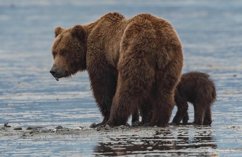 Alaska 7.jpg