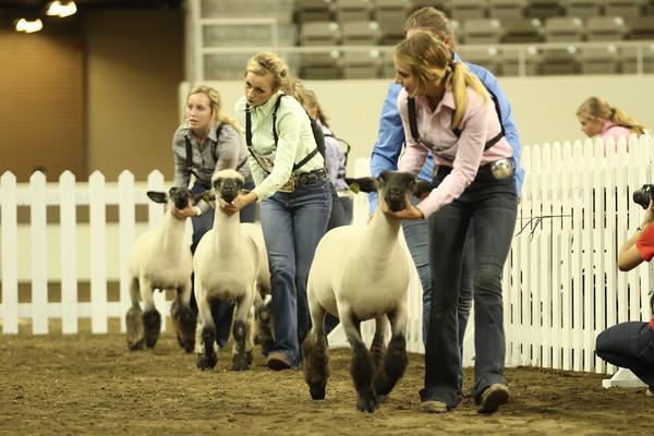 Ringshots - Lambs
