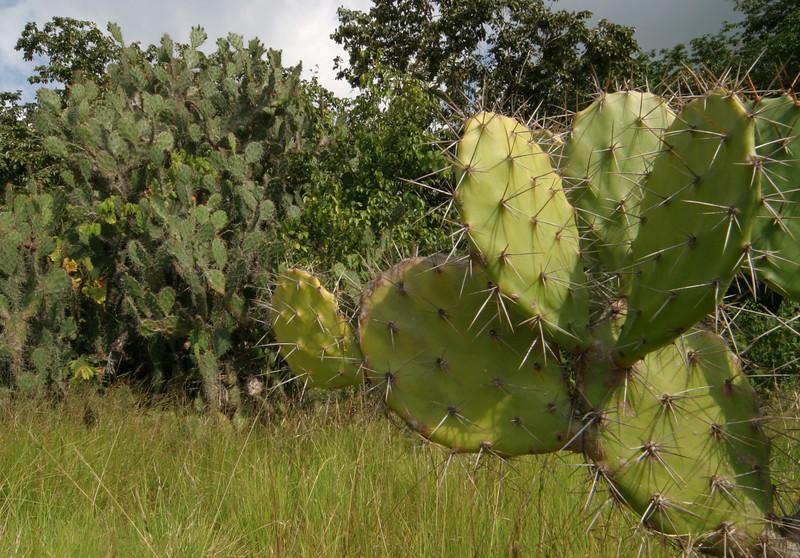 IN358-cactus.JPG