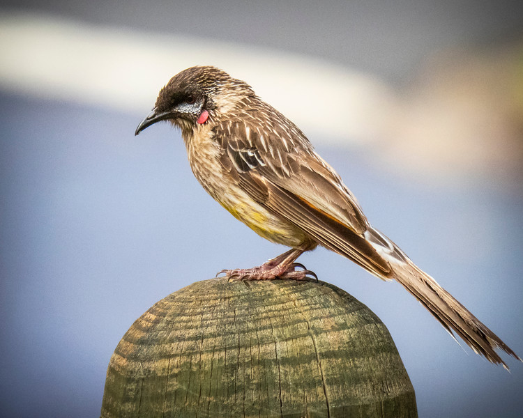 birds  000113.JPG