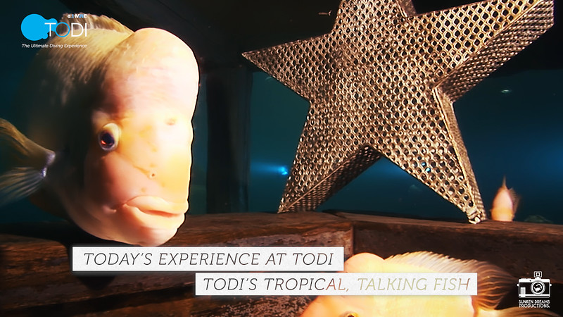 TODI TODAY: TODI's Tropical, Talking Fish - Season 1