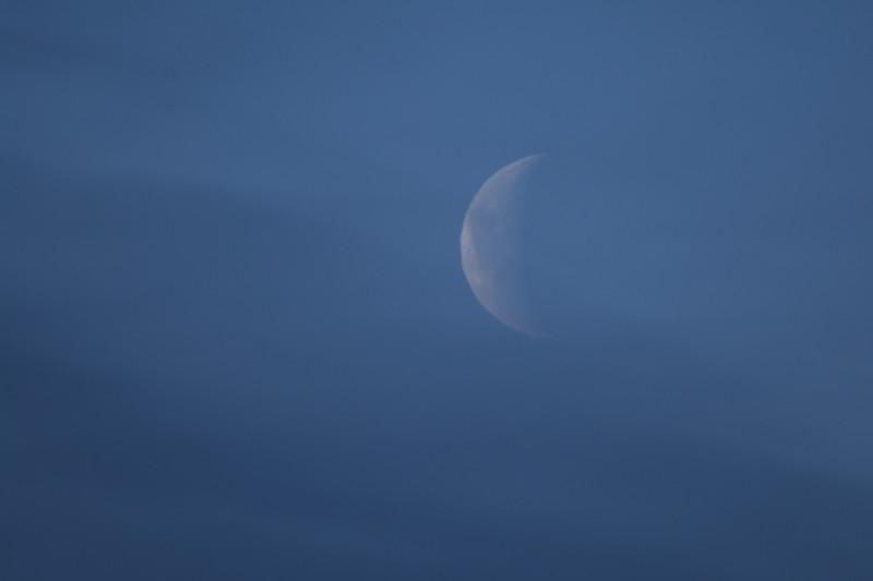 Waverly Moon