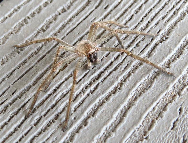 Spider on porch above.jpg