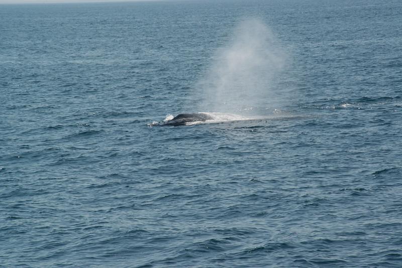 humpbacks-4165.jpg