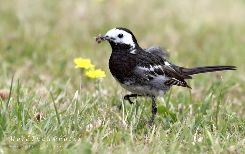 Breakfast!