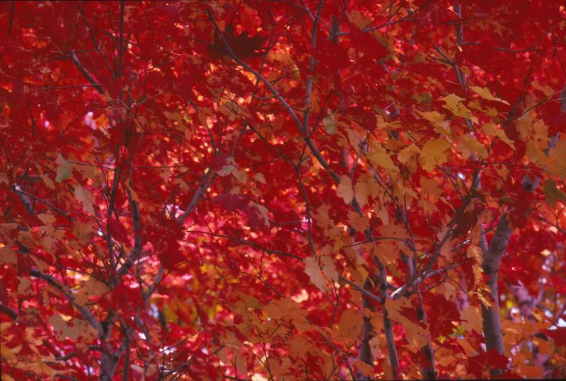 Fall 1984 - 003.jpg