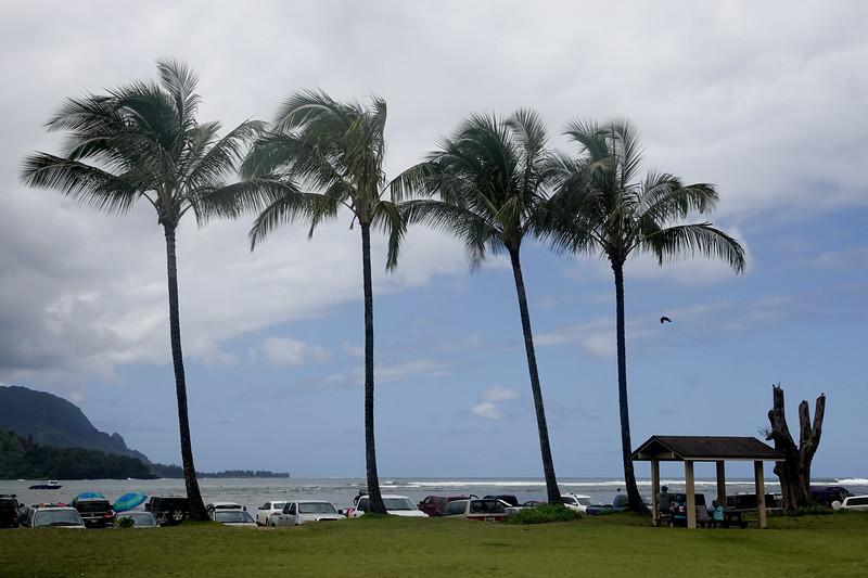 Pal, trees of Hanalei Beach