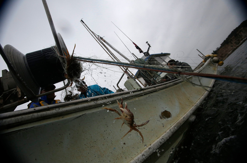". A crab is hauled aboard the ""Shoei Maru\"" fishing boat, close to Hirono town, about 25 km (19 miles) south of Fukushima Daiichi nuclear power plant, Fukushima prefecture May 26, 2013. Operated by 80-year-old Shohei Yaoita and 71-year-old Tatsuo Niitsuma, the boat\'s catch will be used to test for radioactive contamination in the waters near the Fukushima Daiichi nuclear facility. Commercial fishing has been banned near the tsunami-crippled nuclear complex since the March 2011 tsunami and earthquake. The only fishing that still takes place is for contamination research, and is carried out by small-scale fishermen contracted by the government.  Picture taken May 26, 2013. REUTERS/Issei Kato"