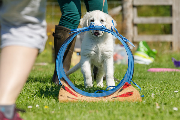 HARROGATE DOG TRAINING