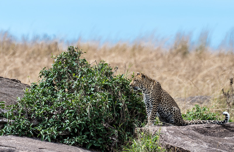 Kenya034.jpg