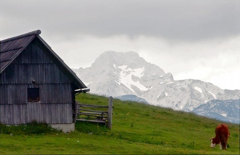 Velika Planina Kamnik 29-06-14 (96).jpg
