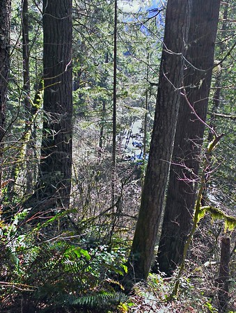 North Fork Clackamas River - Fishermans Trail