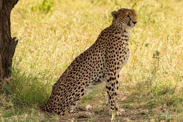 2021 Serengeti