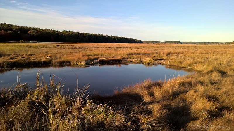 autumn color, on the Phippsburg Peninsula
