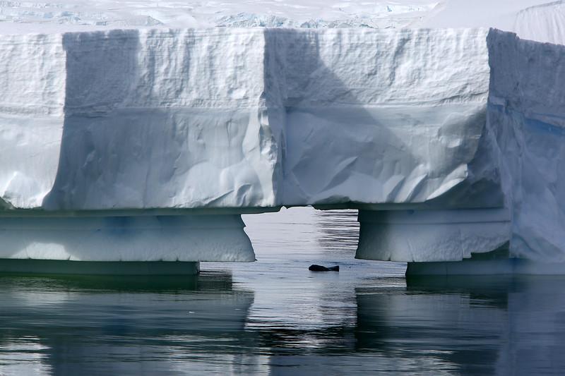 Antarctica_39.JPG