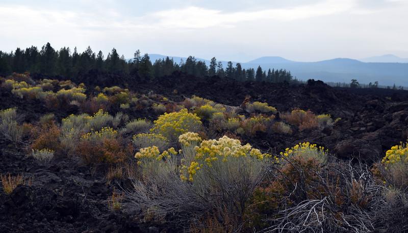 Newberry Volcanic (20).jpg