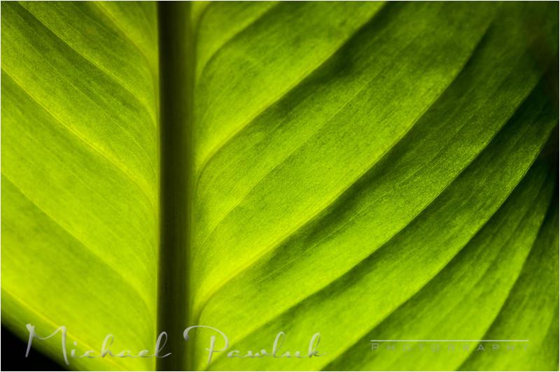 backlitgreen.jpg