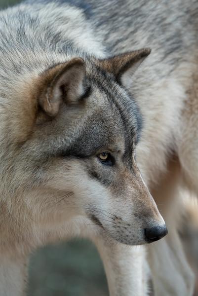 Seacrest Wolves_-20.jpg