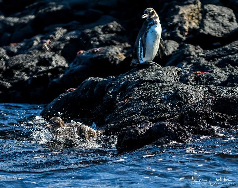 2018 Sombrero Island-8.jpg