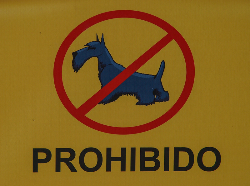 No Schnauzers