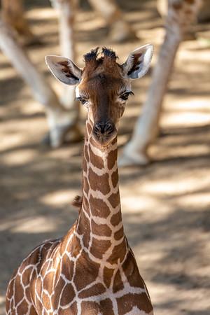 Dallas Zoo August 19, 2020
