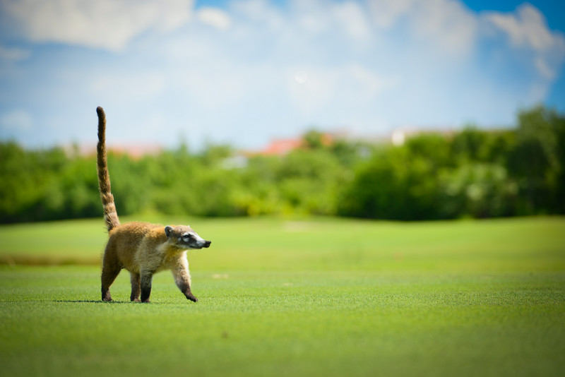 Cancun-20120914-1765--2090271114-O.jpg