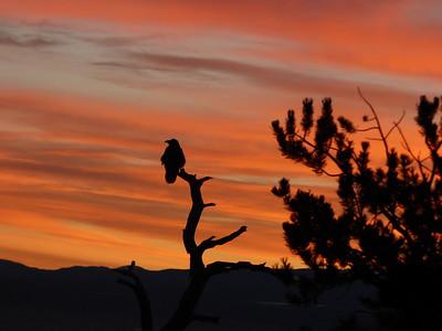 Ravens at Sunrise