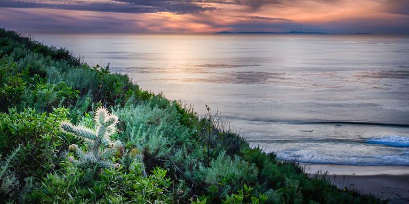 Coastal_Tribolet-68.jpg