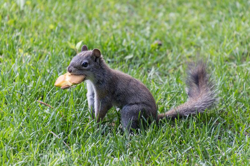 Squirrel with Mushroom