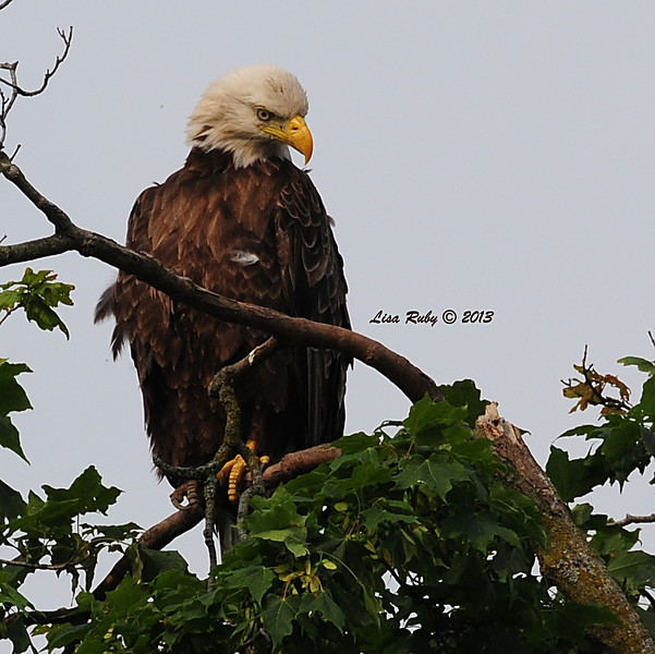 """Dad Decorah. 6/30/13. """"What do you think, is this my better profile?"""""""