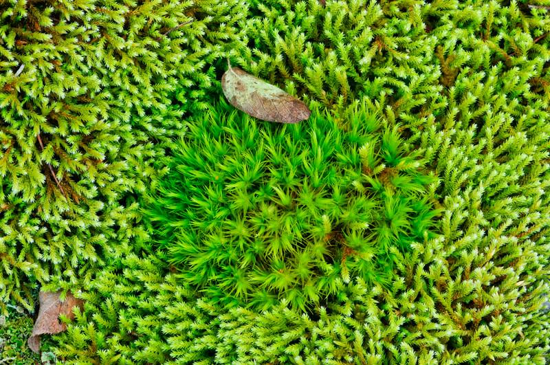 moss_Oct 17-2010_01.jpg