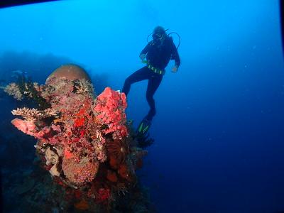 Volivoli Underwater 3