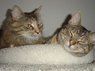 Tabby & Ally