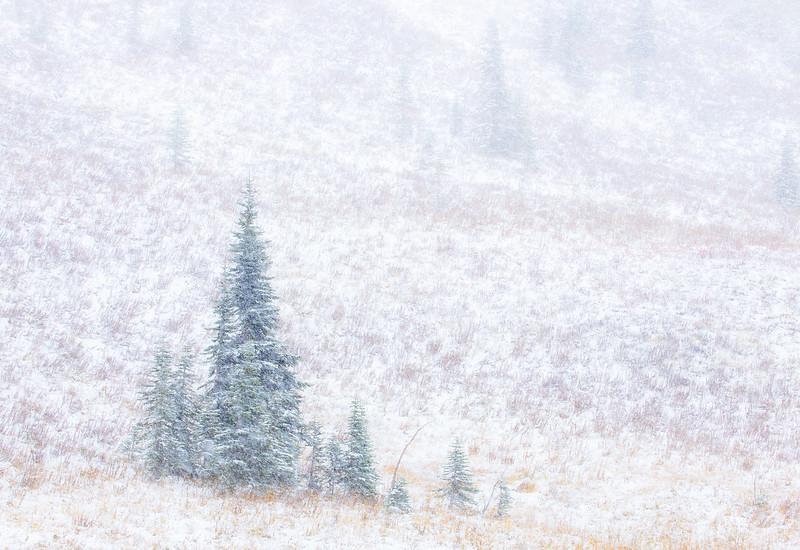 Soft Snows