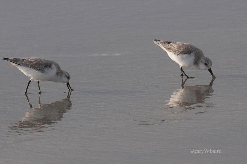 Sanderling Duo