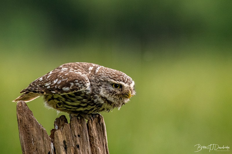 The Little Owl Shoot-6532.jpg