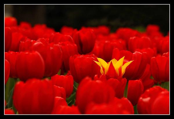 Flore - Flora
