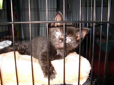 Kitten at five weeks