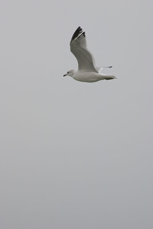 "Gull Wing (Submitted to PXITE for ""Fly"")"