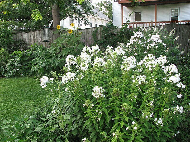 garden-2008-08-0643_std.jpg