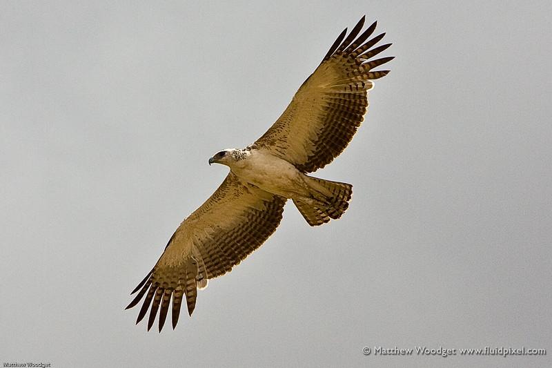 Hawkish Behavior