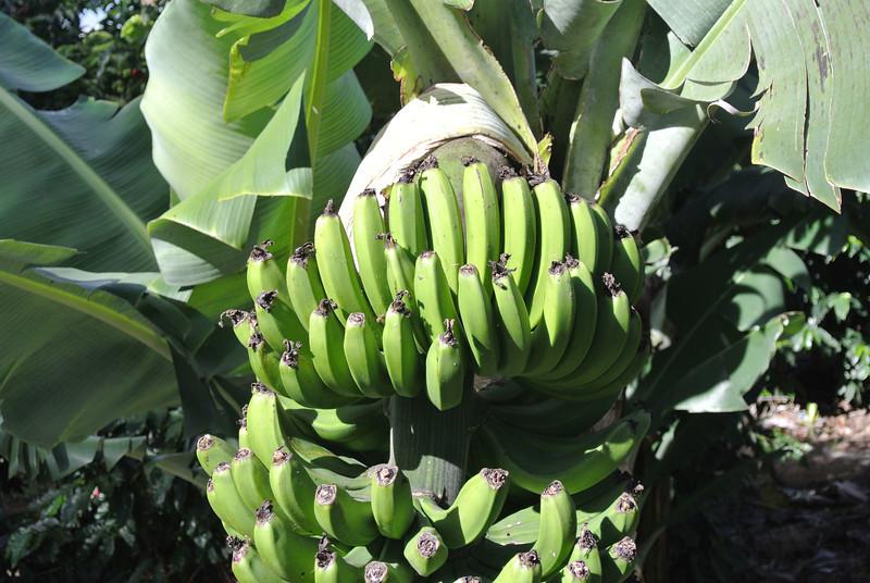 2012_Costa_Rica_December_  0010.JPG